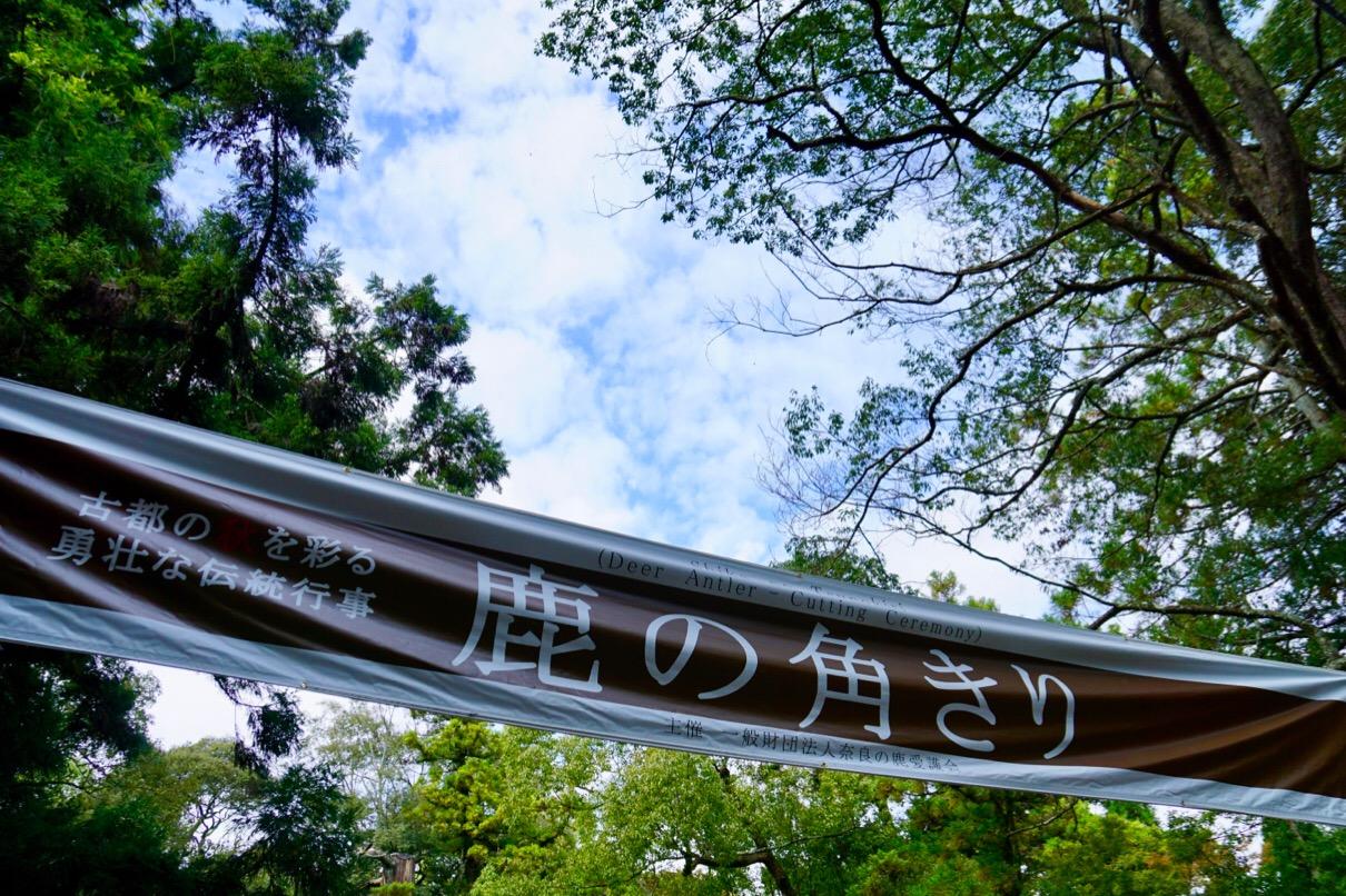 その後歩いて奈良公園内にある鹿苑へ。