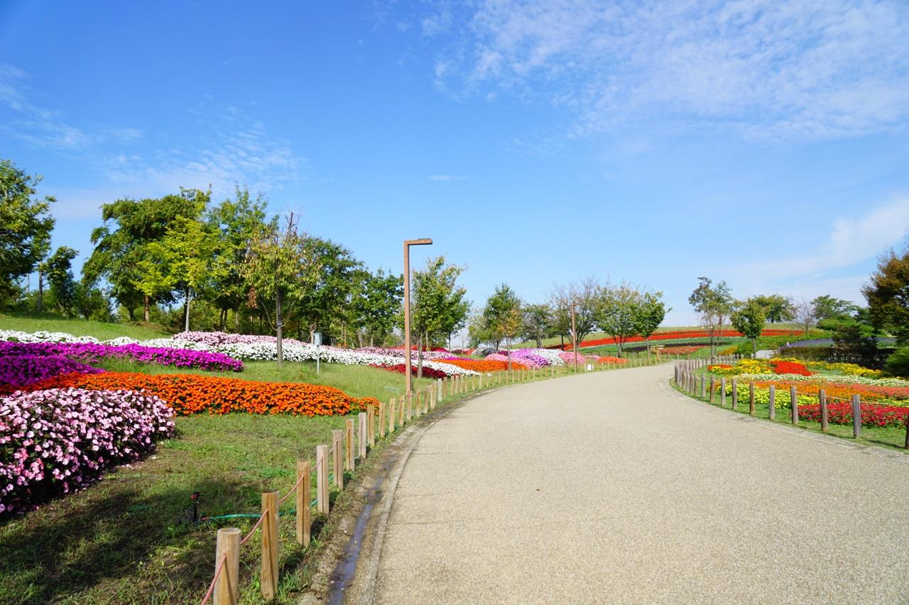 青空ピザというお店が出ていました。ランチもできてとても気持ちいい公園です。