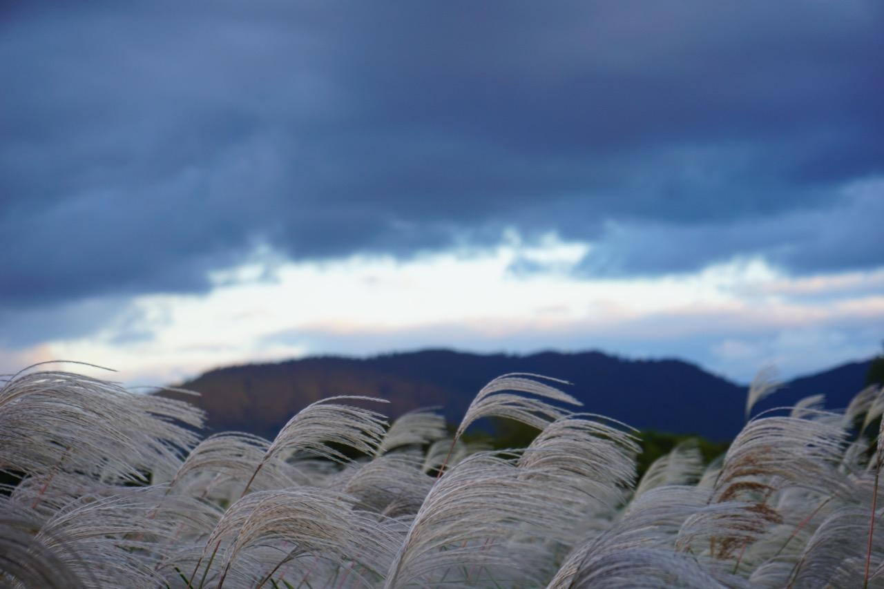 東側の春日山の様子。ススキがいっぱい!