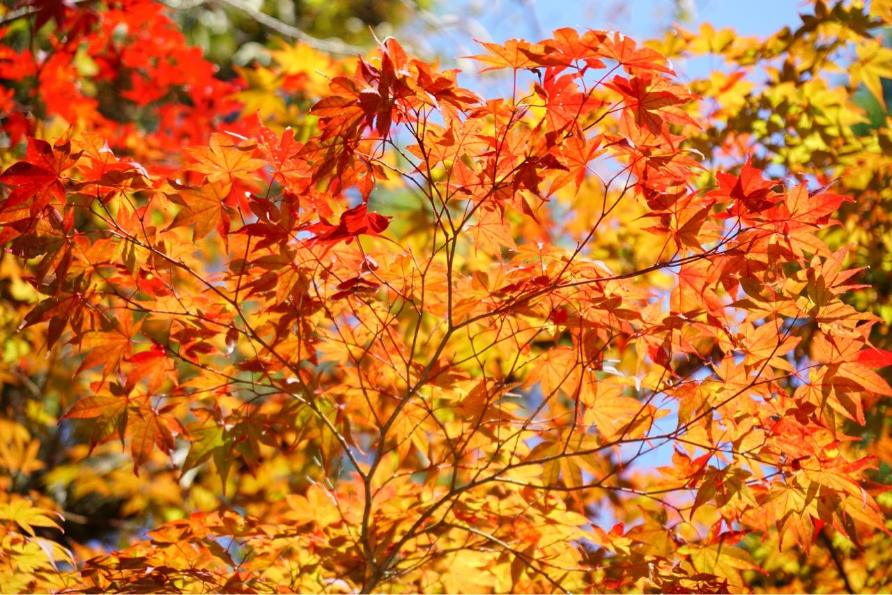 紅葉も始まっていました。