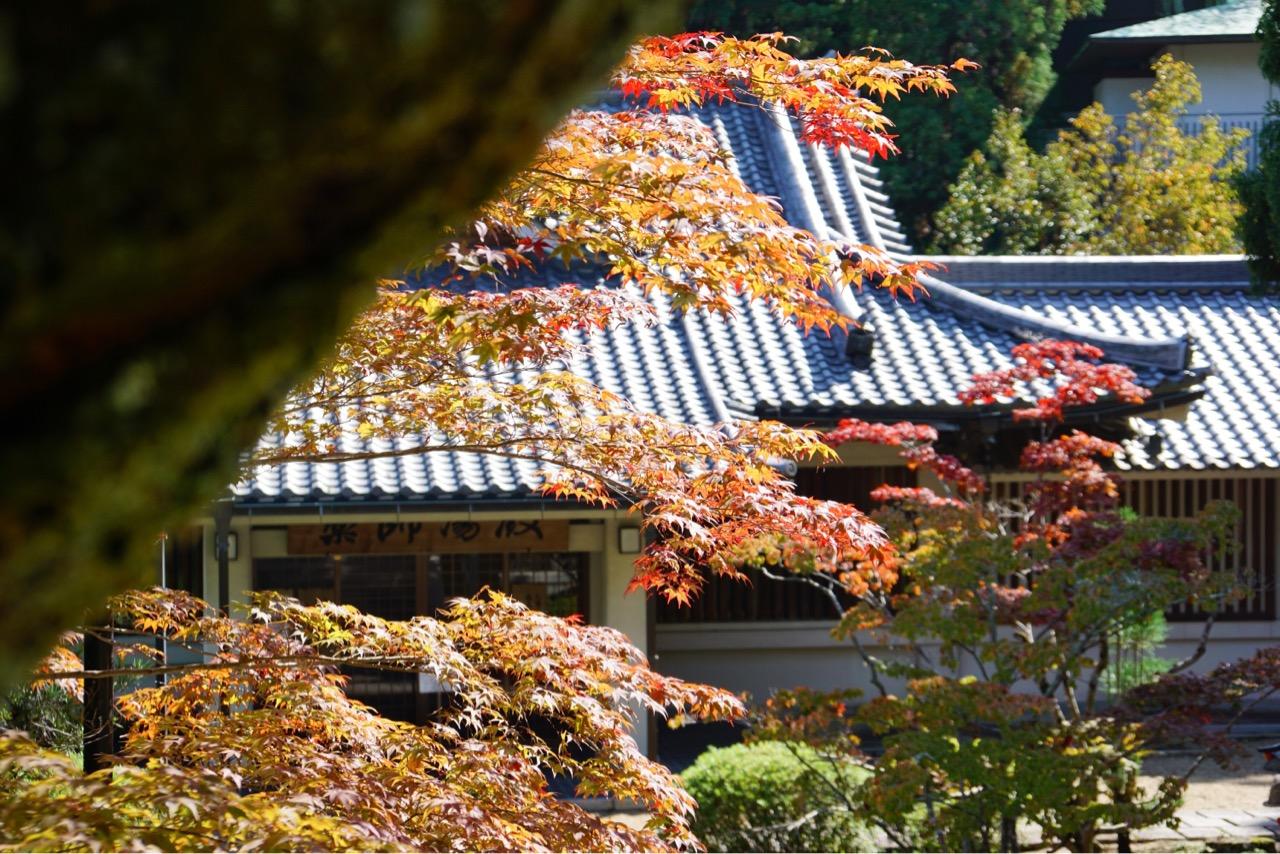 薬師湯殿 この辺りは紅葉が進んでとても綺麗でした。