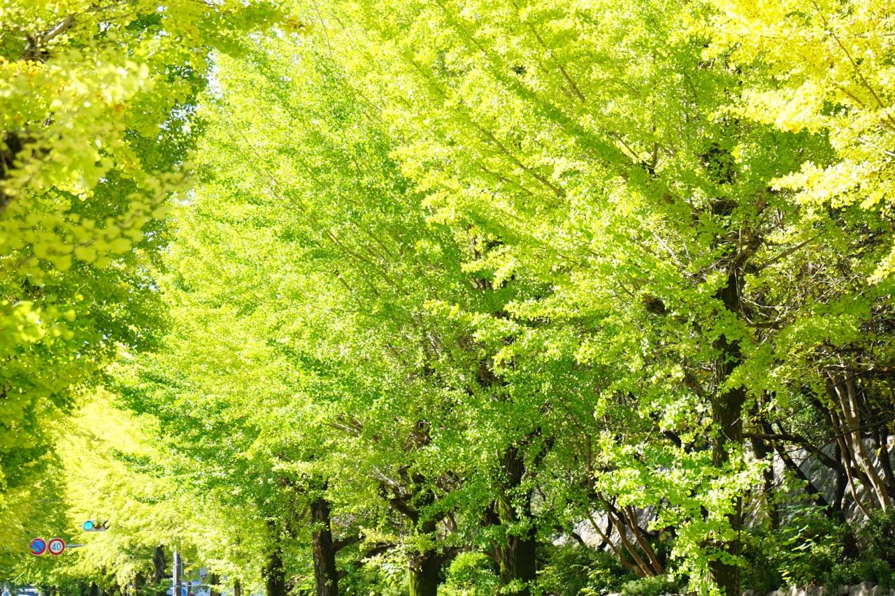 天理市の市木として多くの市民に愛されています。