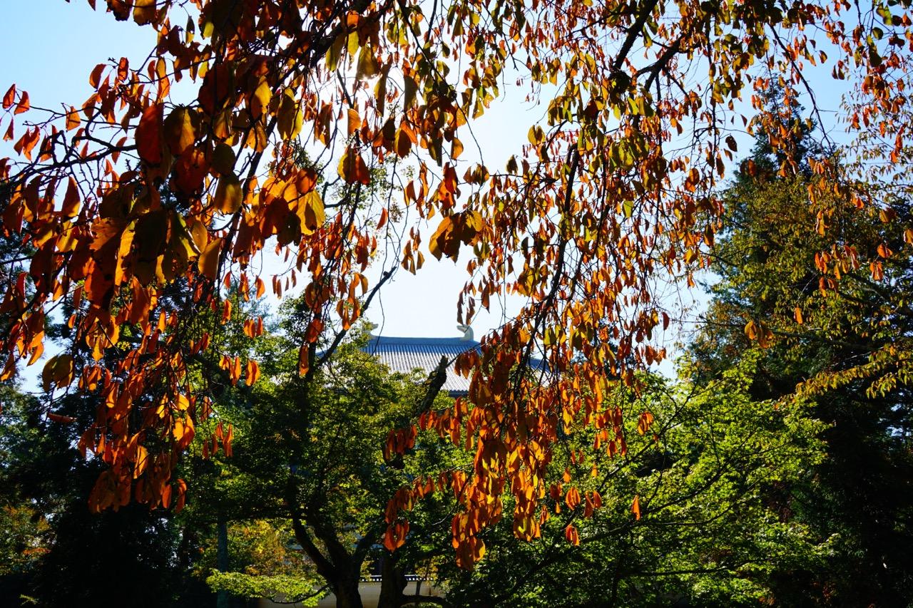 東大寺裏の講堂跡は紅葉が進んでいてとても綺麗でした。