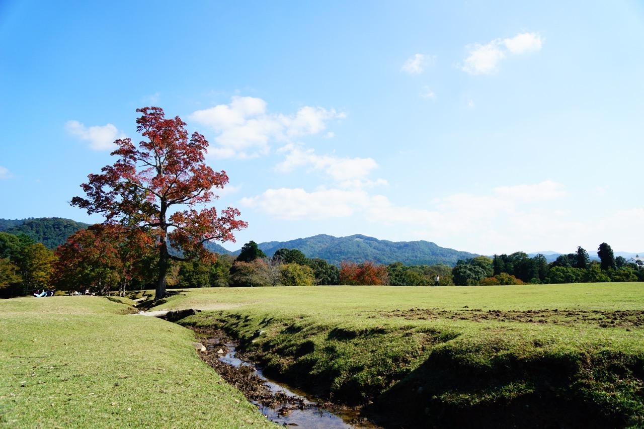 飛火野 芝の緑と紅葉がとても綺麗で写真を撮る人がたくさんいました。