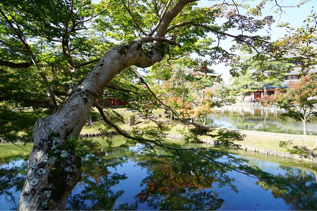 東大寺前の池