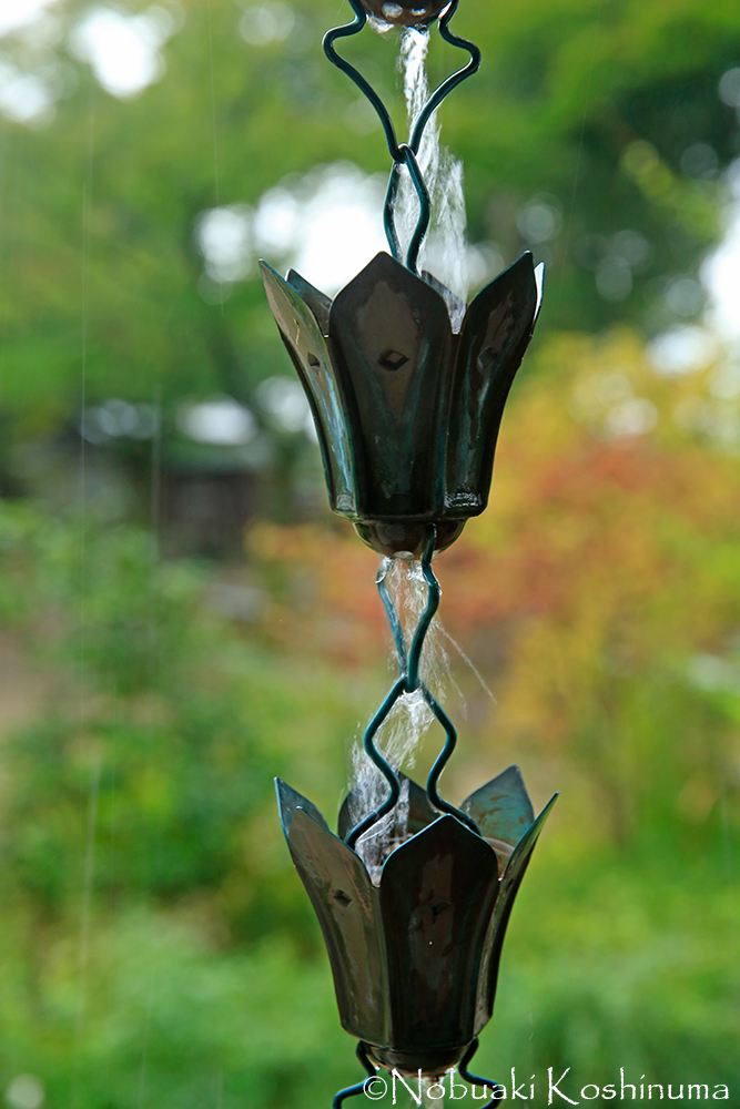 宝蔵の鎖樋(くさりとい)。耳を近づけるときれいな音色が!