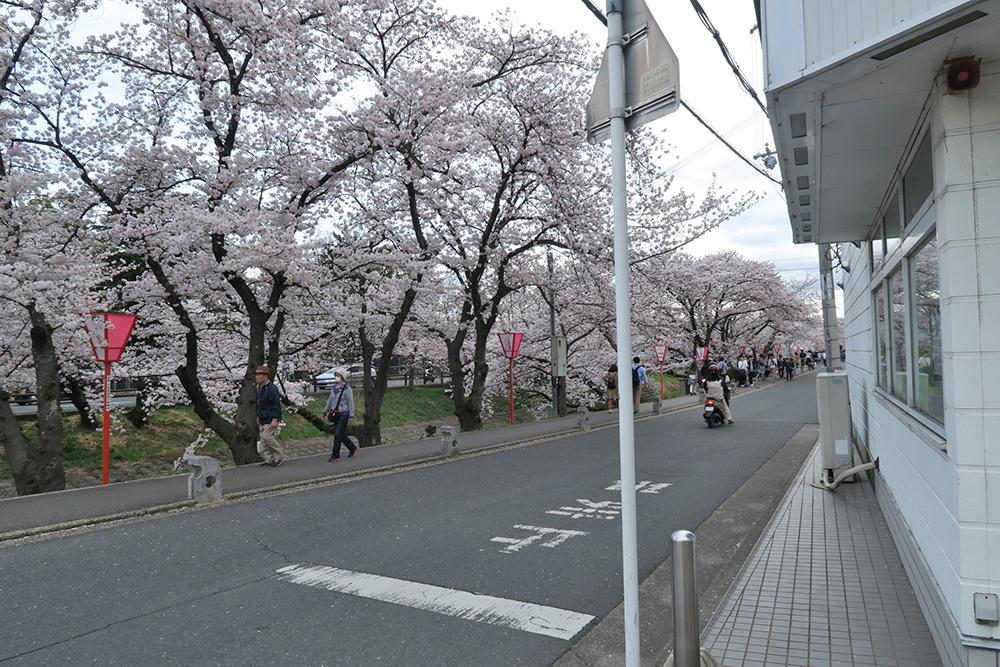 駐車場に車を停めて、歩いて高田川に到着。