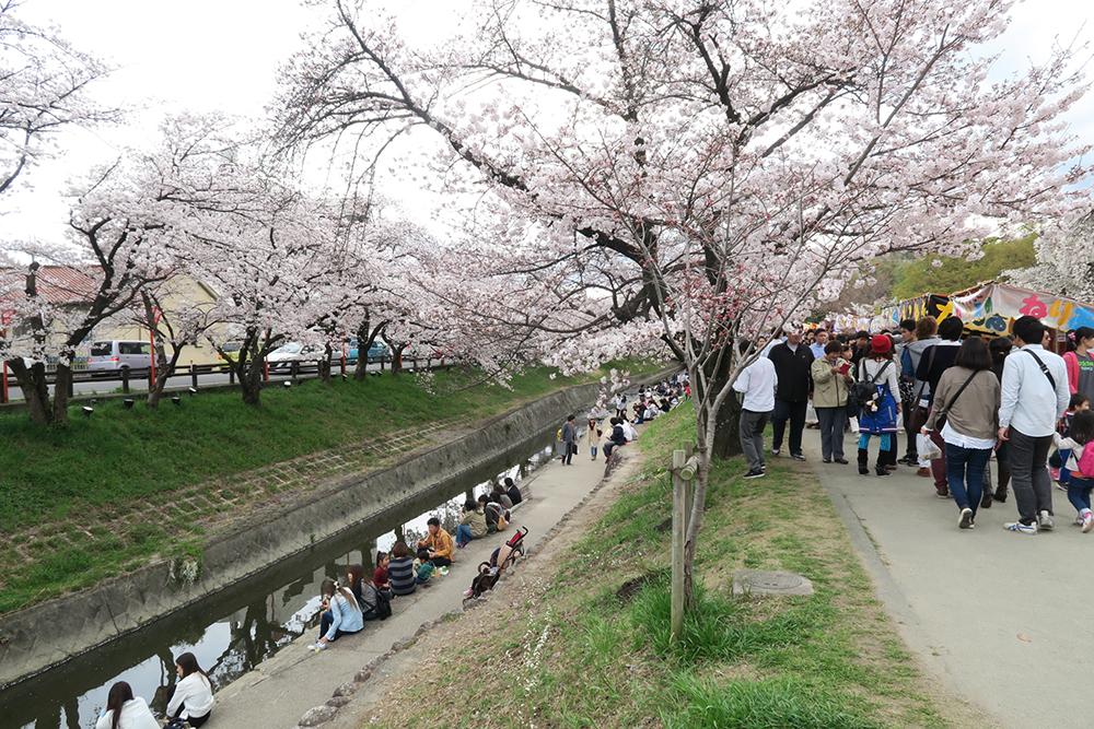 屋台もたくさん出ていて楽しいです。川辺で桜見もできますので、お弁当持参でもいいかも!