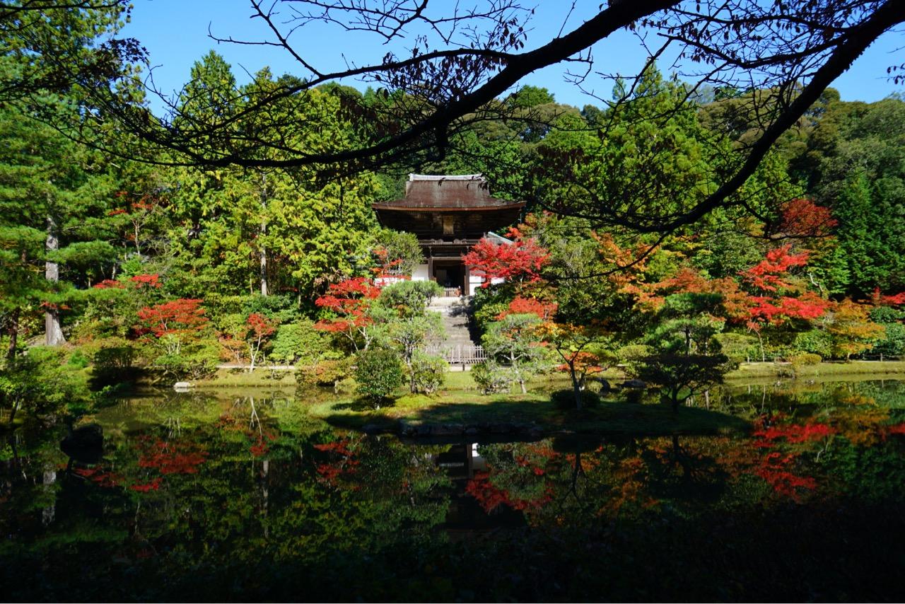 池に映り込む紅葉が見事でした。