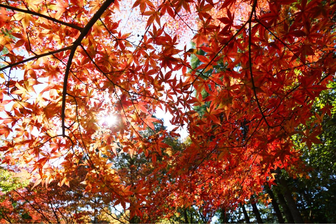 境内にはたくさんの紅葉があって池にも映り込むのでとても華やかでした。