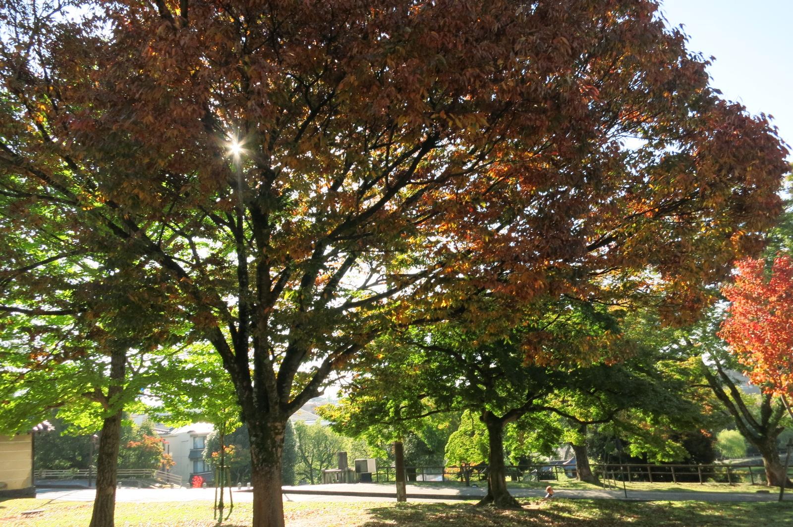 紅葉も始まっていて、キレイな景色にたくさん出会えました。