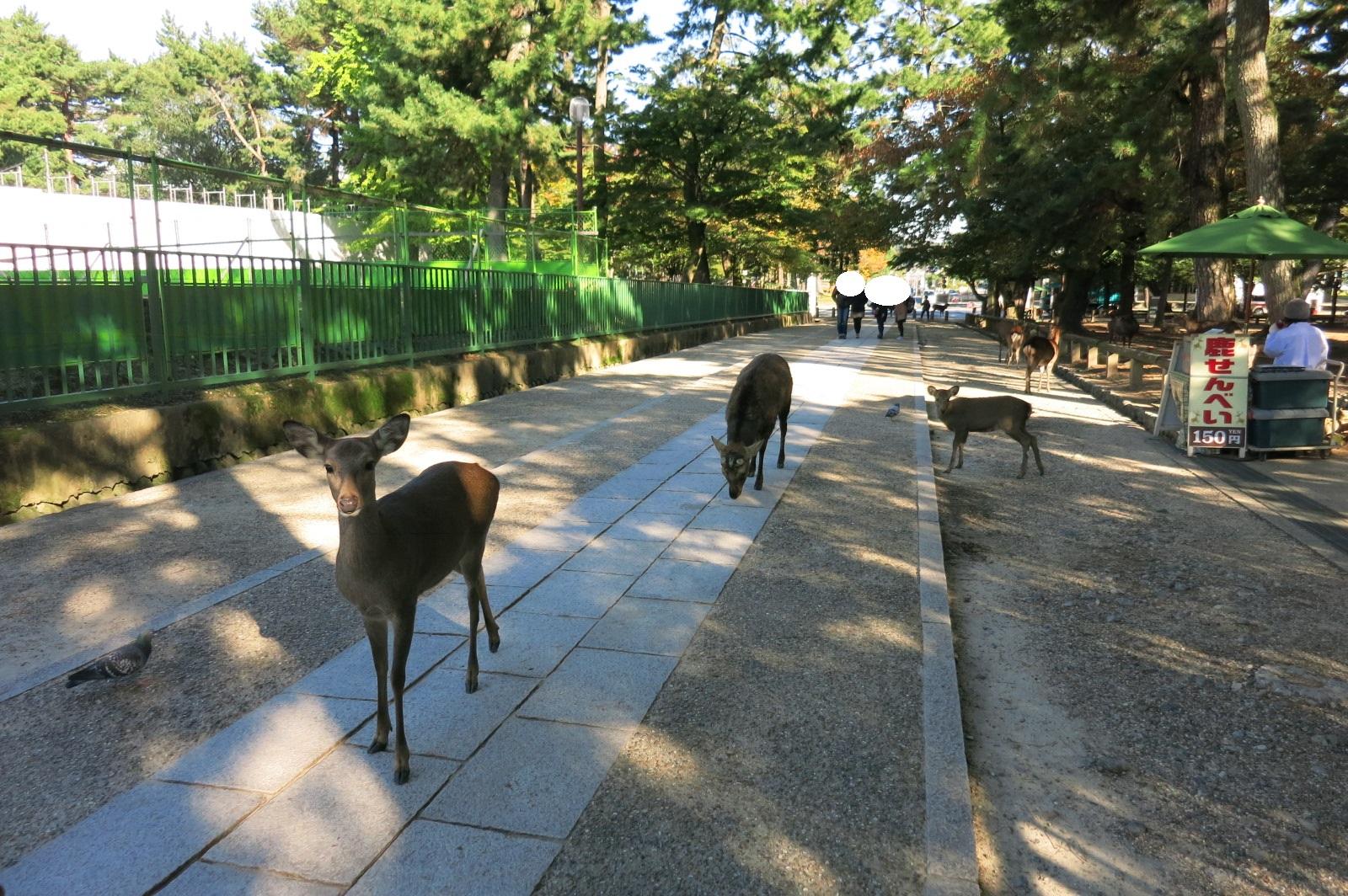 鹿さんたちのいる奈良公園内を歩き、