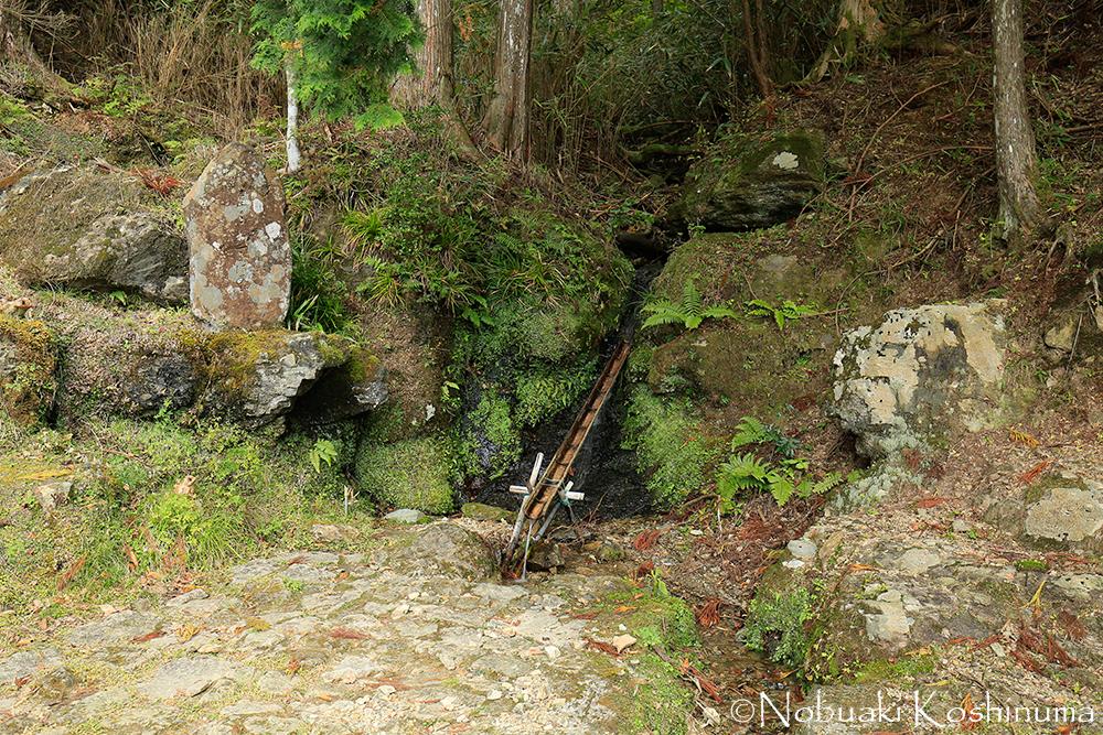 「とくとくと落つる岩間の苔清水汲みほすまでもなき住居かな」と西行が詠んだ苔清水が今でも湧き出ています