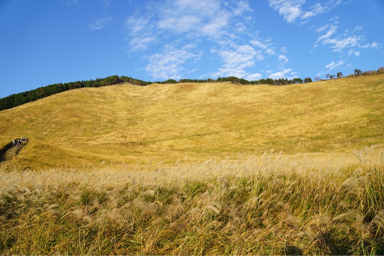 斜面一帯がススキに覆われています。