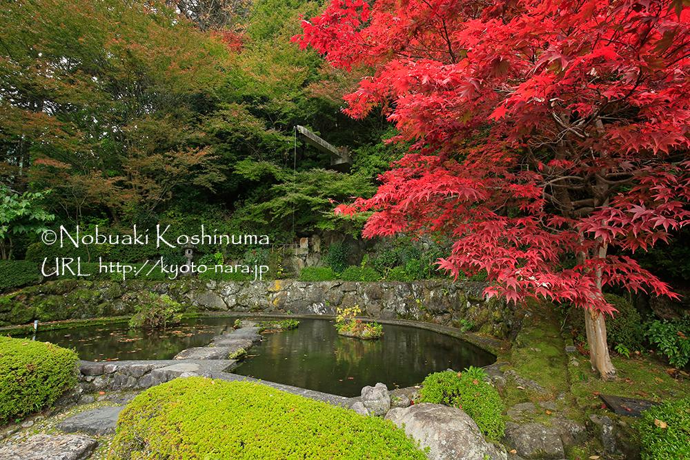 青蓮の滝。奥の樹木はこれからキレイに染まります。