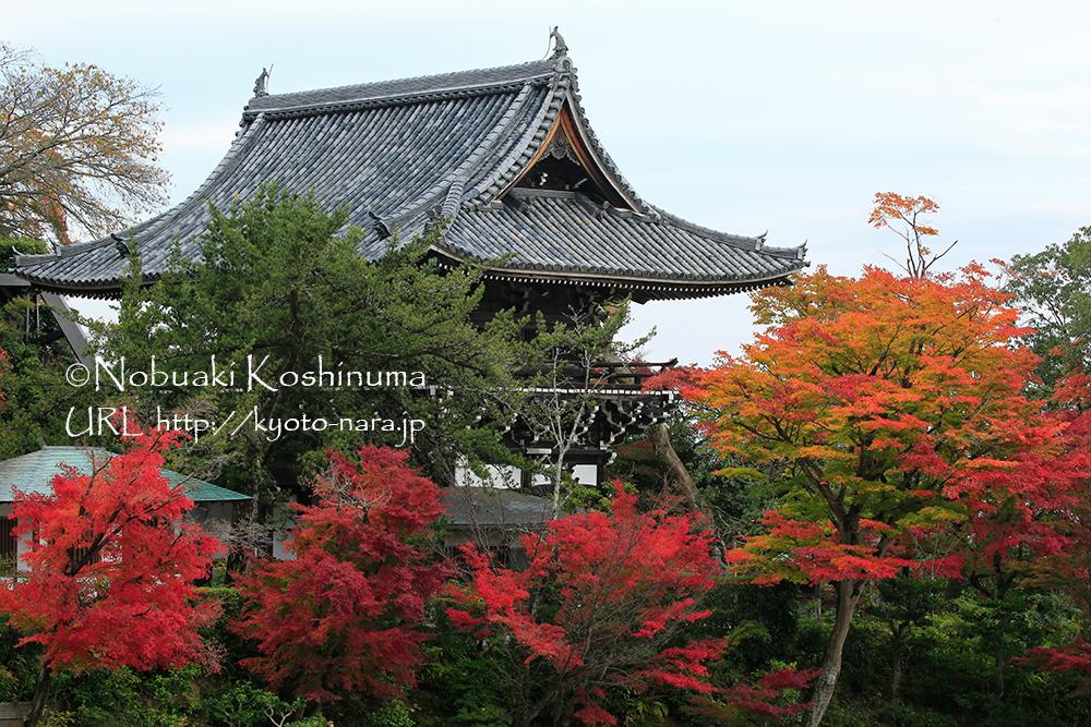 文殊寺宝館から観る山門。樹々がきれいに染まっていました!