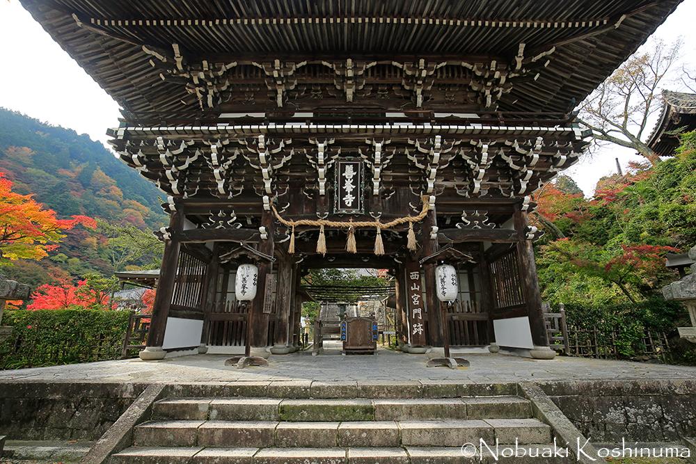 善峯寺の山門(楼門)。山々の紅葉もきれいでした。金剛力士は、運慶作と伝えられています