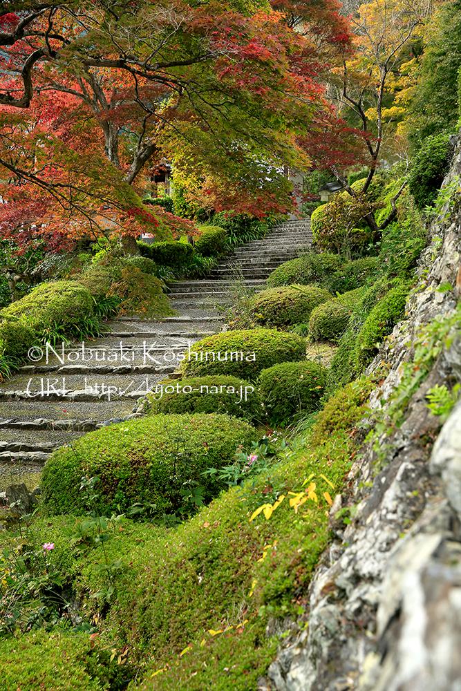 「遊龍(ゆうりゅう)の松」がある手前の階段です。見ごたえのある紅葉でした。