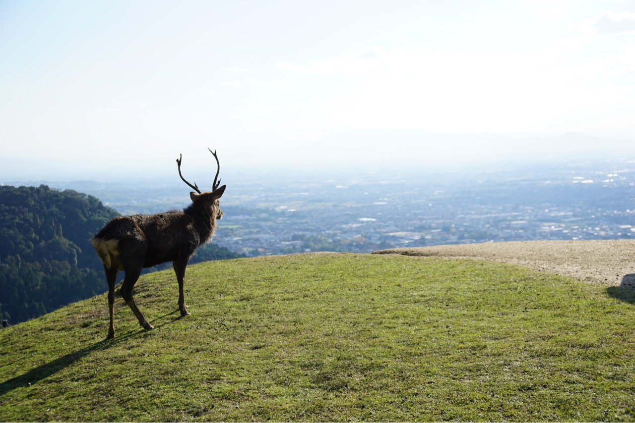 鹿も綺麗な景色を眺めています。
