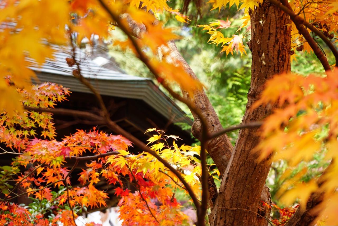 境内と駐車場には多くの紅葉があり見ごたえあります。