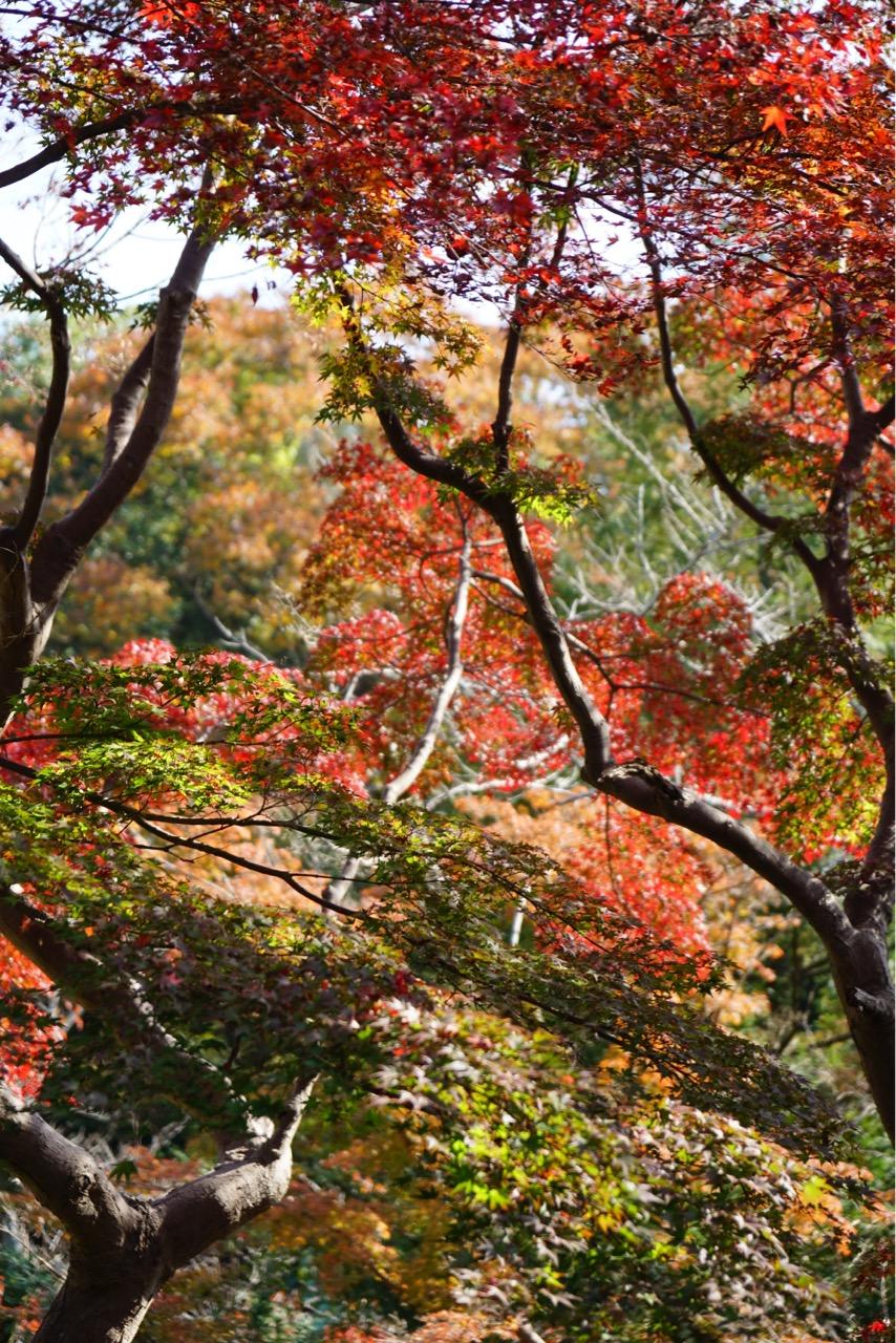 信貴山朝護孫子寺の周りの山々の紅葉はもう少し先のようでした。