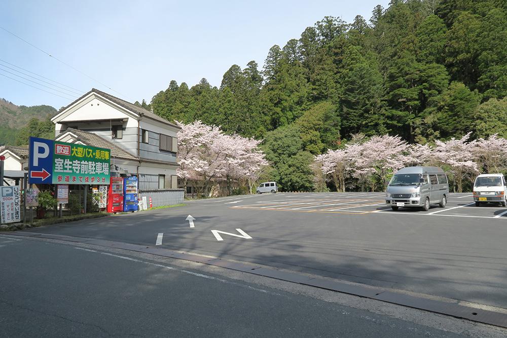 室生寺前駐車場です。駐車場にも桜が咲いていました。