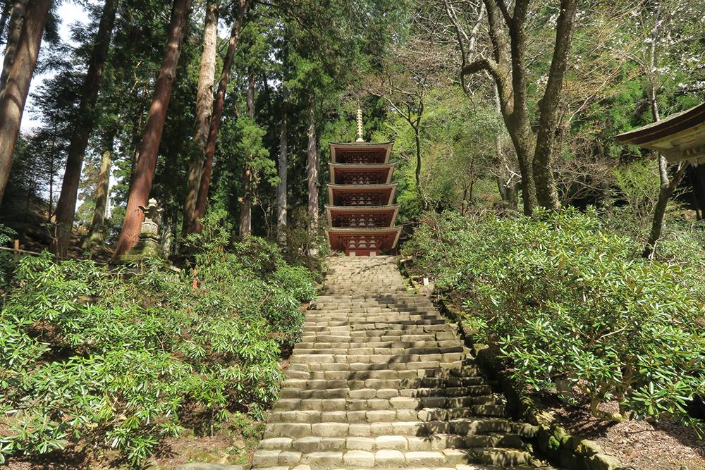 階段を上ると五重塔です。もうすぐシャクナゲが咲き始めます。