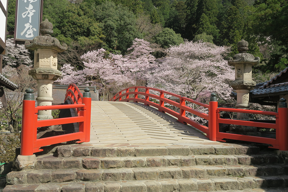 室生川に架かる朱塗りの太鼓橋。桜も満開です。