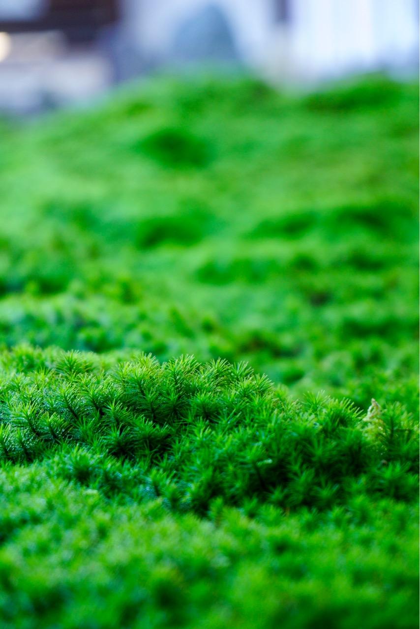 境内には苔がびっしり。迫力のある力強い苔でした。この日も丁寧に手入れされていました。