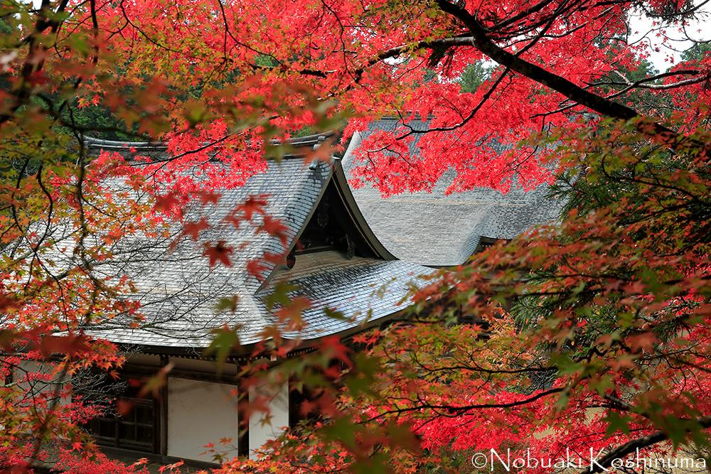 紅葉でも有名な高雄・神護寺に来ました!