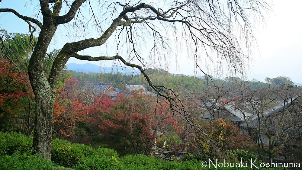 天龍寺境内の小路から望める景色です。素晴らしいですね!