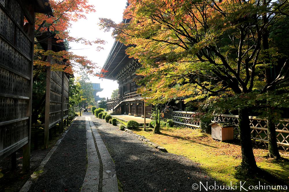 本堂東側から仁王門(中央左の奥です)を望む。左側にあるお庭もぜひお立ち寄りください。