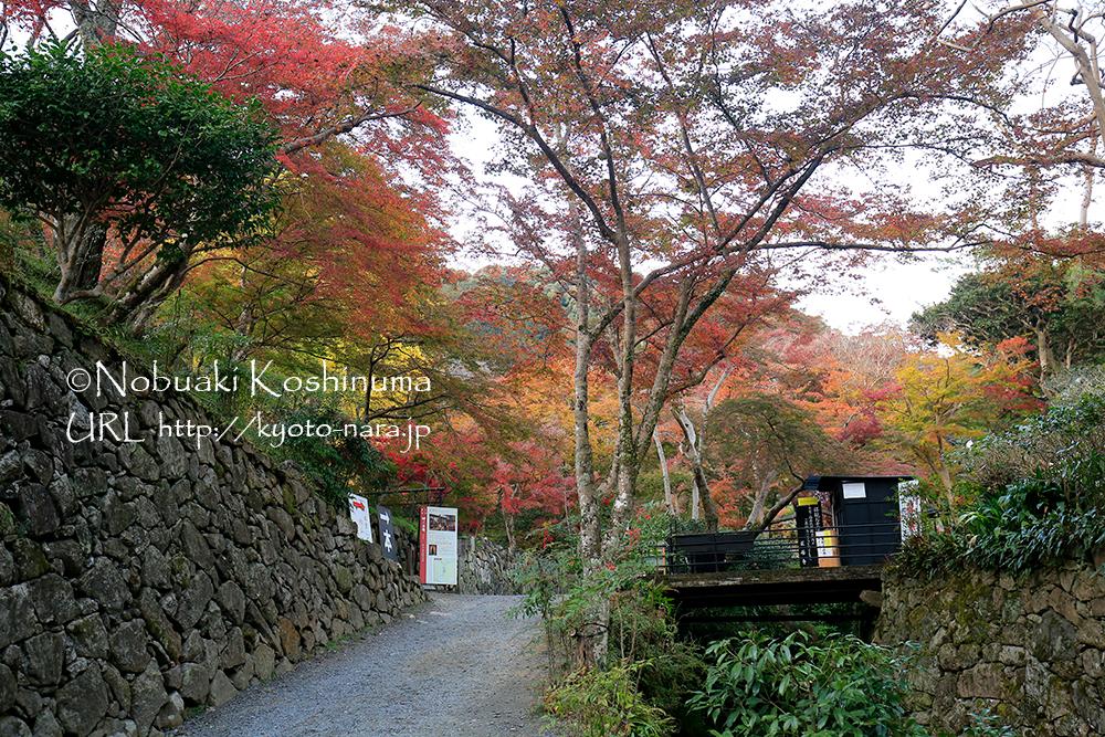 清酒発祥の地と伝わる正暦寺に行ってきました。紅葉は見頃を迎えていました。