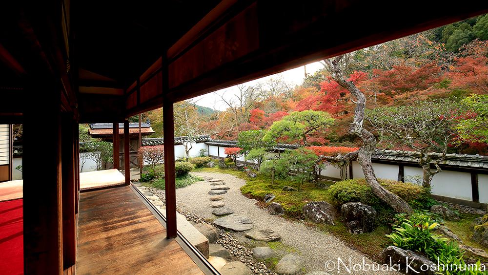 福寿院客殿の庭。洗練されていて美しいお庭ですね。