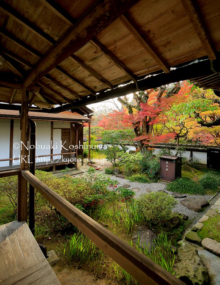 美しさのあまり脚を止めて見入ってしまいました。福寿院客殿の隣にある護摩堂へ続く通路から。