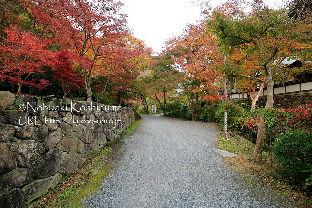 紅葉を楽しみながら本堂に向かいます。