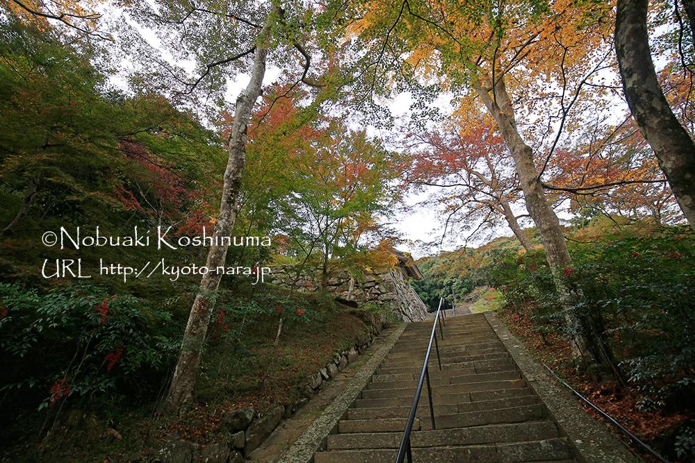 階段を上ったところに本堂があります。拝観料は、福寿院と合わせて500円です。
