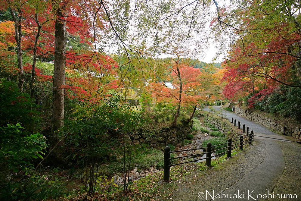 本堂から福寿院に戻るときの小路。紅葉が見事です!