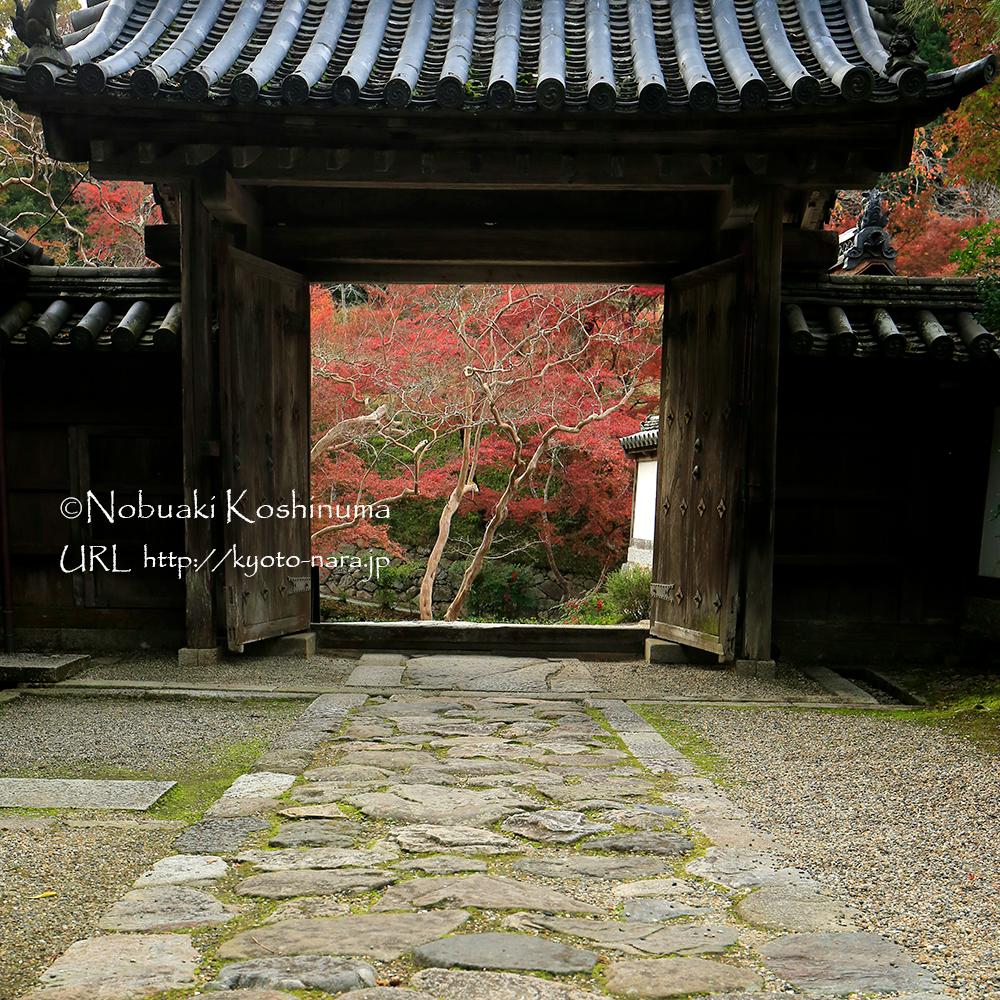 門をくぐり、振り返ると絵画のような美しい紅葉が目に留まります。
