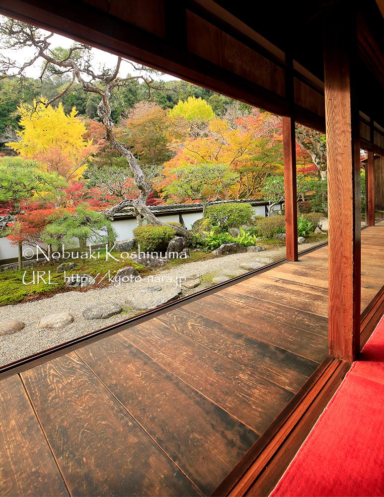 福寿院客殿から見たお庭です。塀の外の紅葉も取り入れた借景庭園は見事!素晴らしいですね。