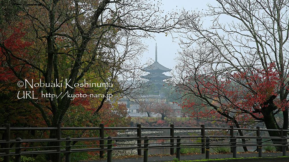 興福寺の五重塔。