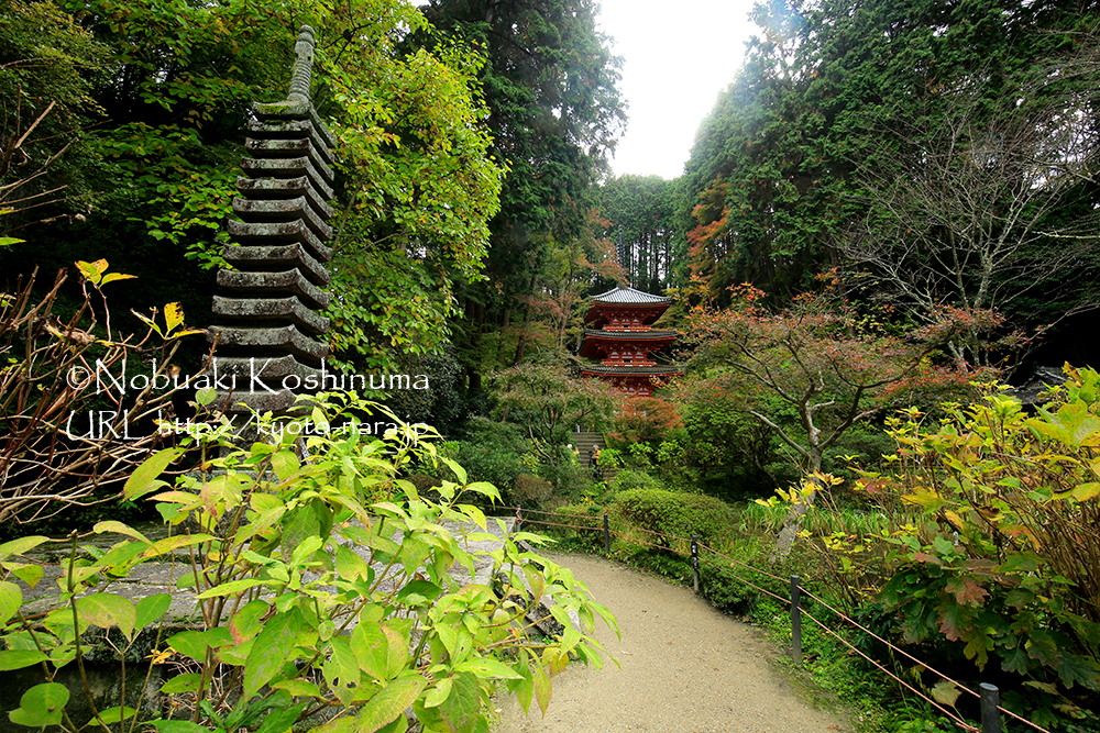 岩船寺の境内。紅葉の見頃は11月末くらいになりそうです。