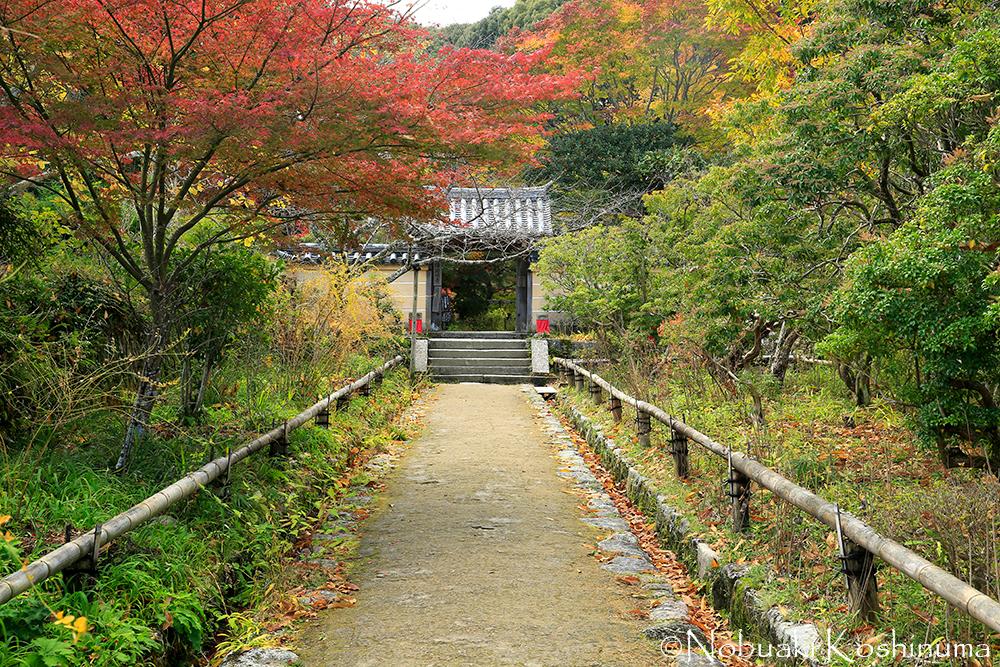 浄瑠璃寺の山門付近も紅葉がきれいですね。期待大!!