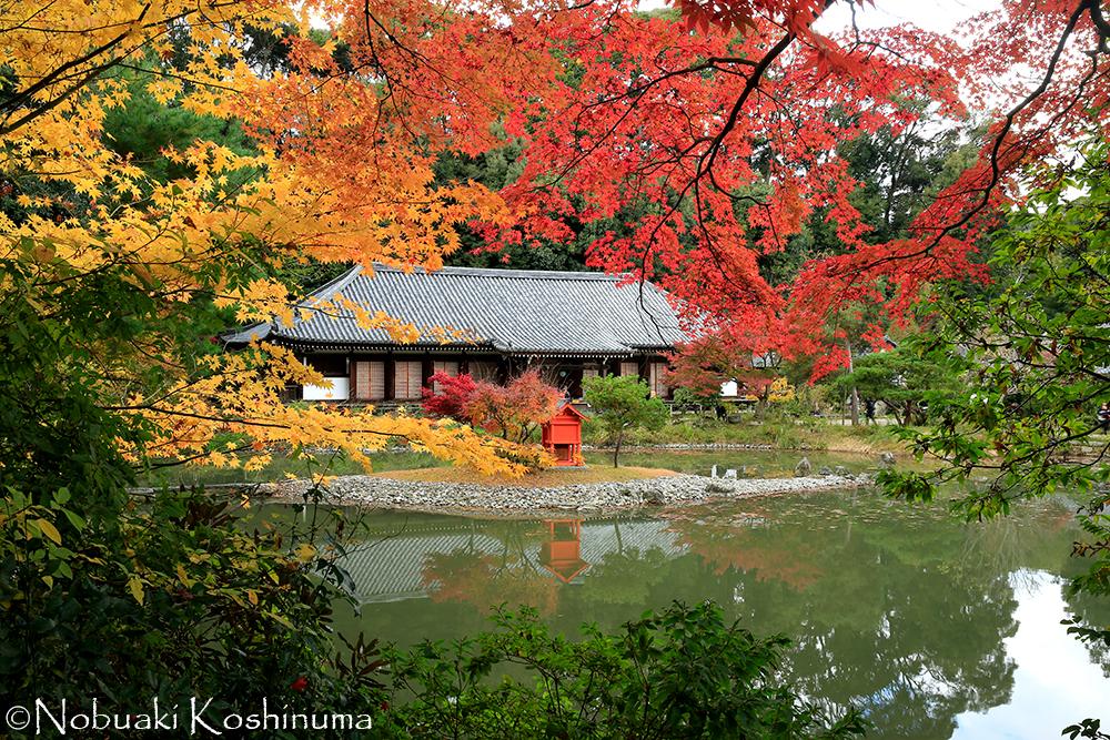 特別名勝にも指定されている庭園と国宝と本堂、そして美しい紅葉!!