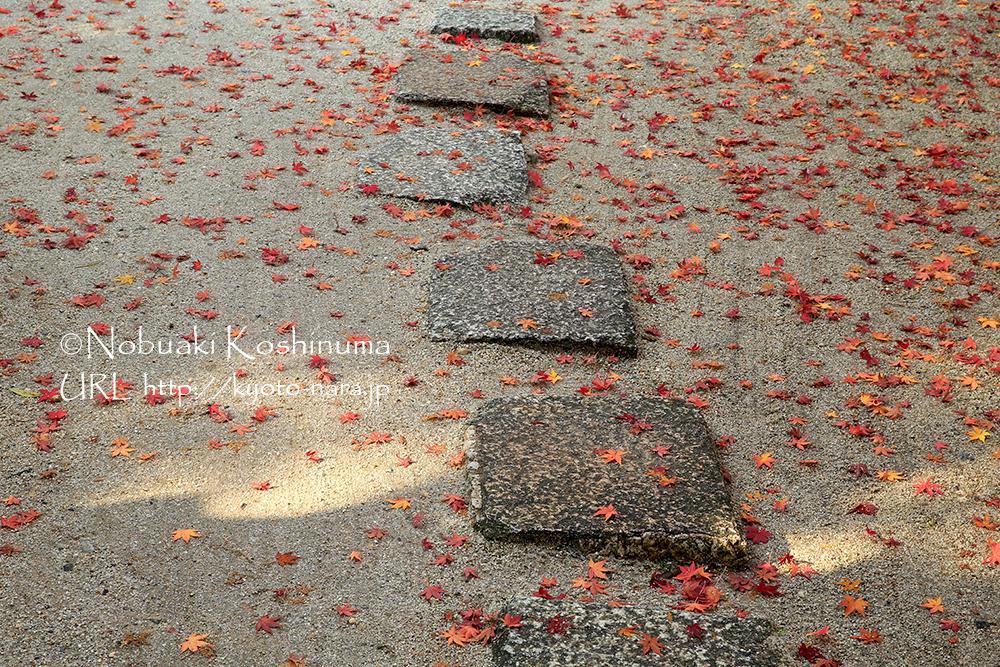 足元を彩る落ち葉も素敵ですね♪