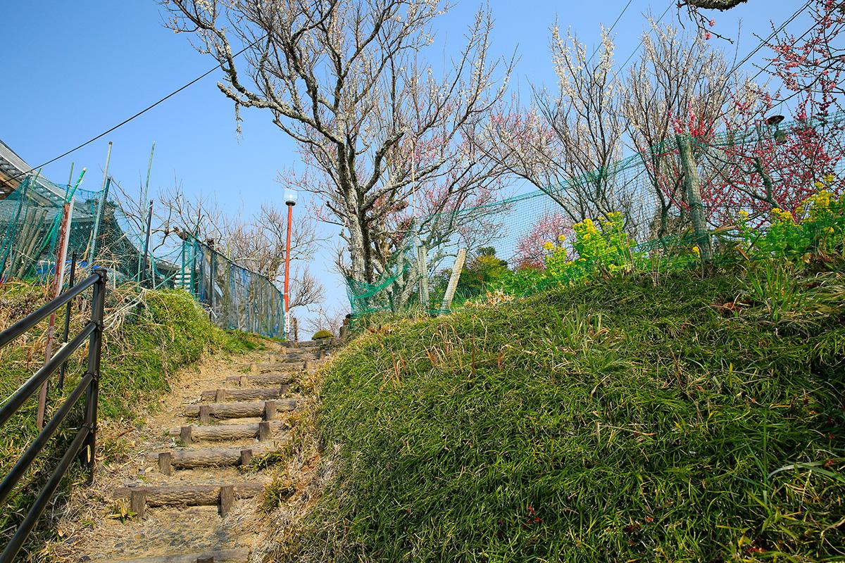 真福寺に続く道です。菜の花が咲いてました。