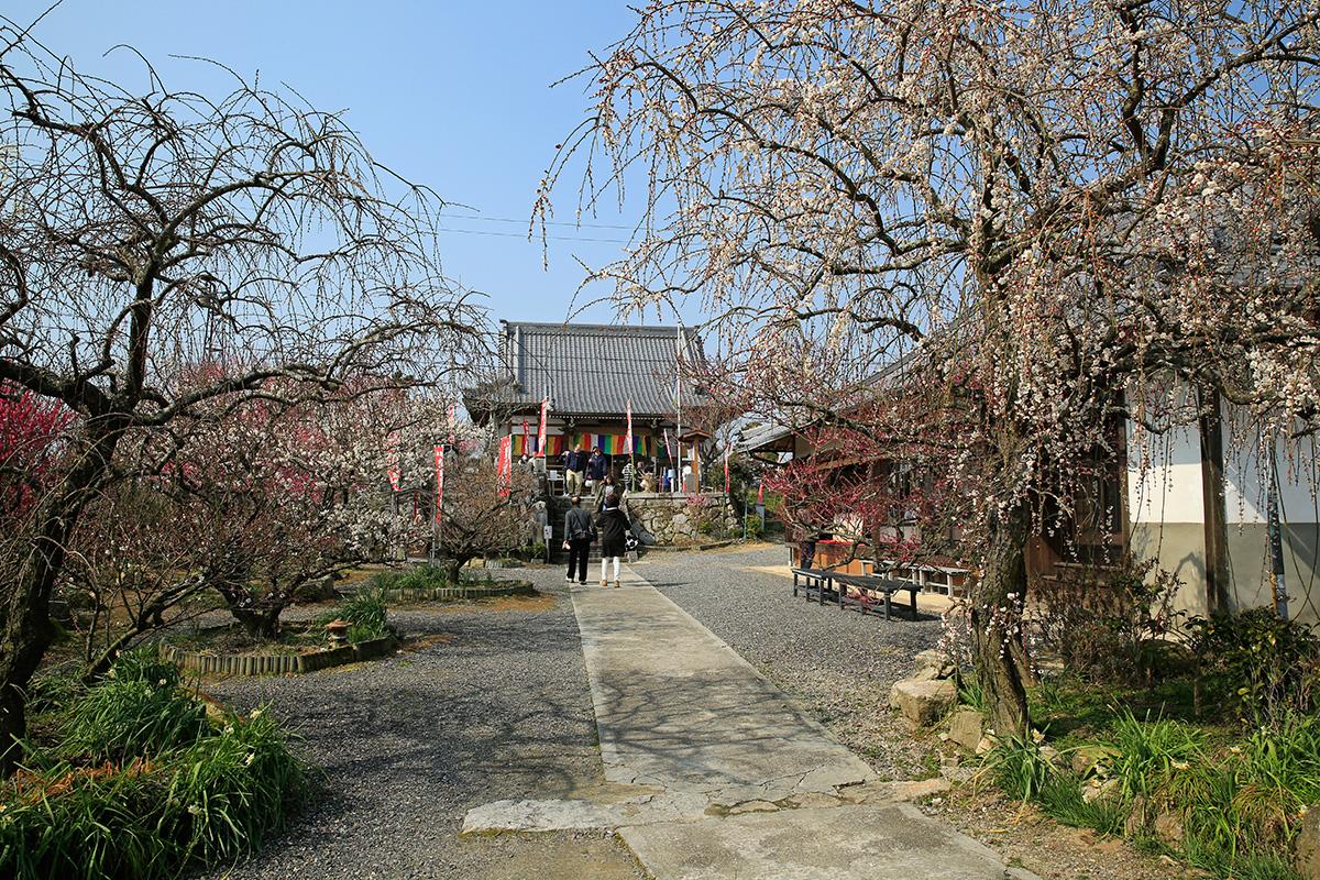 真福寺。このお寺の境内に梅が植えられたのが始まりと言われているそうです。