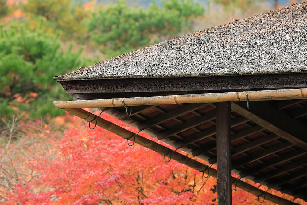 屋根の降雨を排水する樋(とい)に竹が使われています。