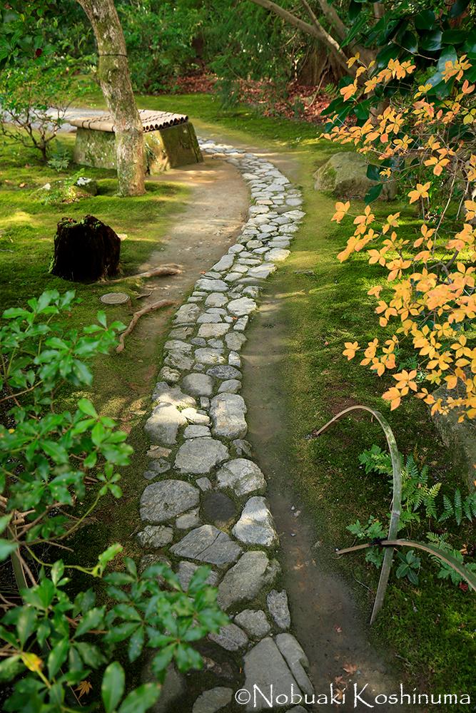 30年かけて造られたお庭ですので、じっくり見ていこうと思います。石畳が美しいです。。。