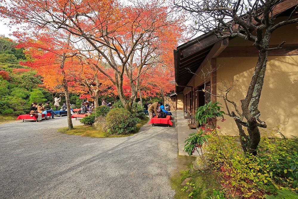 入場料1000円には、お抹茶と茶菓子費用が含まれていて、お茶席でのんびり楽しむことができます。